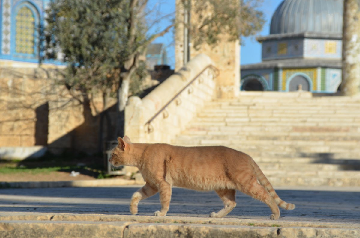 Izrael2014_041